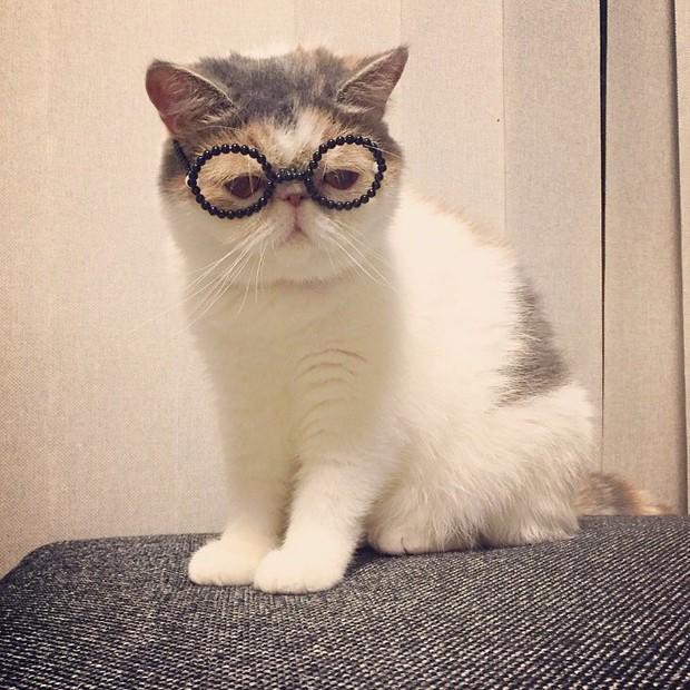 Chú mèo có bộ mặt nghiêm trọng nhất quả đất - Ảnh 25.