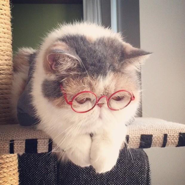Chú mèo có bộ mặt nghiêm trọng nhất quả đất - Ảnh 27.