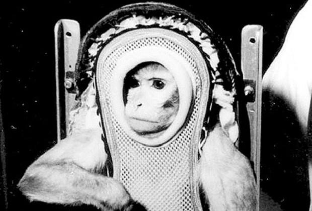 Số phận bi thảm của những loài động vật từng du hành vũ trụ - Ảnh 2.