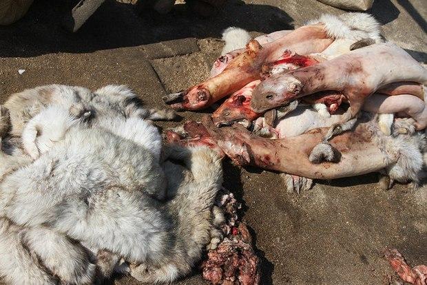 Sự thật tàn ác trần trụi trong các lò nuôi của ngành công nghiệp lông thú - Ảnh 5.