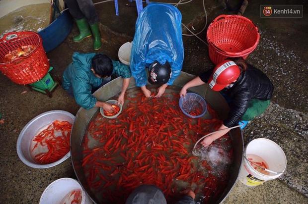Chợ cá chép tấp nập trước ngày tiễn Táo quân về trời - Ảnh 5.