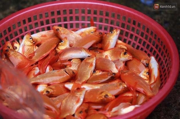 Chợ cá chép tấp nập trước ngày tiễn Táo quân về trời - Ảnh 6.