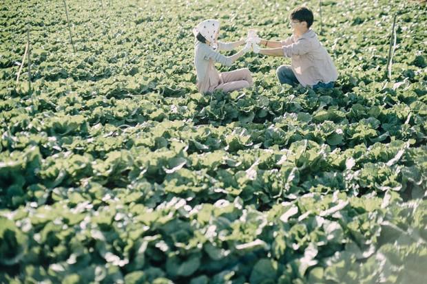 Chỉ cần yêu nhau thật nhiều thì ảnh cưới chụp ở... vườn rau cũng khiến người ta xuýt xoa - Ảnh 11.