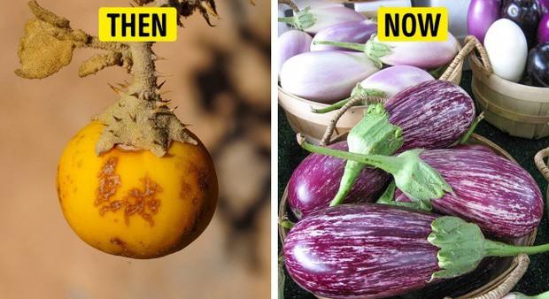 Tổ tiên của các loại rau quả mà ta vẫn ăn ngày nay trông như thế nào? - Ảnh 5.