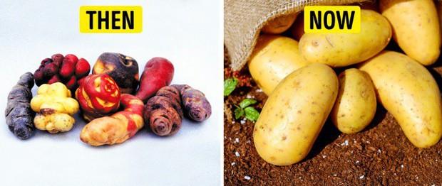 Tổ tiên của các loại rau quả mà ta vẫn ăn ngày nay trông như thế nào? - Ảnh 9.