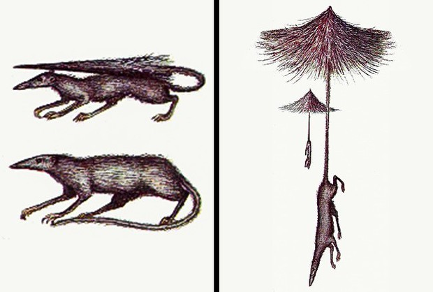 Không thể tin được đây là những loài sinh vật sẽ sống cùng ta trong tương lai - Ảnh 3.