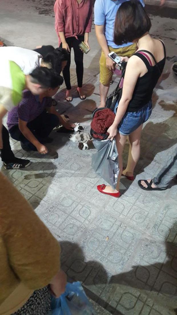 Xót xa trước cảnh 4 chú chó con lần lượt bị ném từ chung cư xuống đất - Ảnh 2.