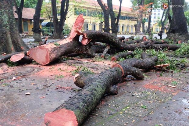 Hà Nội: Cây đổ sau mưa dông, nữ sinh trường Chu Văn An gãy cả tay chân - Ảnh 3.