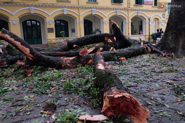Hà Nội: Cây đổ sau mưa dông, nữ sinh trường Chu Văn An gãy cả tay chân - Ảnh 4.