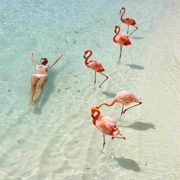 Nóng như thế này chỉ muốn đến ngay chốn thiên đường này tắm biển, chụp ảnh sống ảo cùng hồng hạc mà thôi! - Ảnh 9.