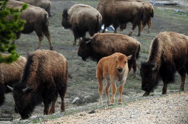 Chùm ảnh: Vì sự vô tâm của con người mà nhiều loài động vật phải chịu kết cục thảm thương đến nhường này - Ảnh 3.