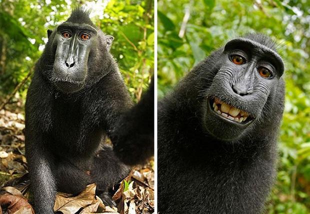 Cười nghiêng ngả với loạt ảnh tự sướng cực cool của động vật - Ảnh 3.