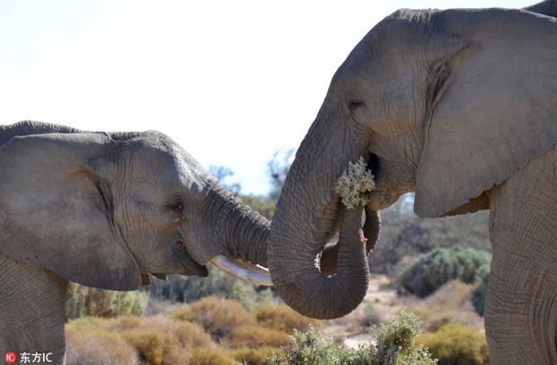 Chờ không nổi tới ngày Valentine, voi đực vội vã ngắt hoa dại bên đường để bày tỏ tình cảm với người yêu - Ảnh 3.