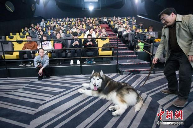 Suất chiếu phim đặc biệt dành cho chó và nguyên nhân khiến nhiều người xúc động nghẹn ngào - Ảnh 2.