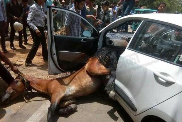 Ấn Độ: Nắng nóng kinh hoàng, ngựa phát điên lao thủng cửa kính, chui vào ô tô đang đi trên đường - Ảnh 3.