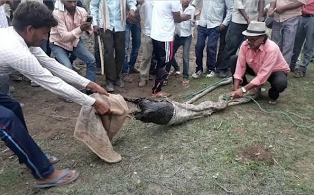 Video: Trăn khổng lồ nuốt chửng một con dê trưởng thành trước sự kinh hãi của dân làng - Ảnh 3.