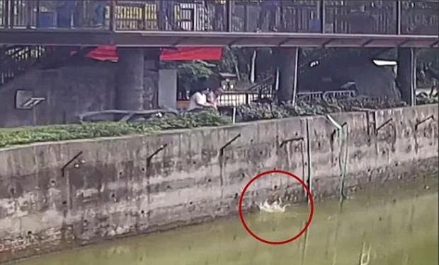 Được chủ dẫn đi chơi, chú chó suýt bị ăn tươi nuốt sống vì rơi vào chuồng hổ - Ảnh 2.
