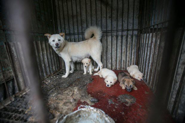 Hàn Quốc: Giải cứu thành công 149 chú chó sắp bị giết thịt mang ra chợ bán - Ảnh 2.