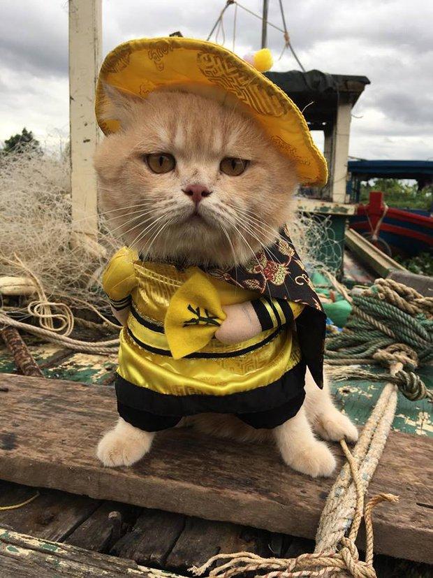 Gặp chú mèo Hoàng Thượng đi chợ vi hành, các con sen đều đứng ngồi không yên - Ảnh 4.