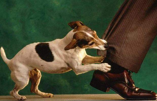 Những việc cần làm ngay sau khi bị chó cắn để tránh nguy hiểm - Ảnh 3.