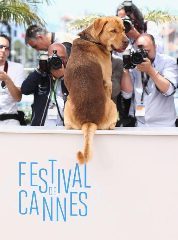 Liên hoan phim Cannes và những khoảnh khắc lịch sử trong 70 năm - Ảnh 19.