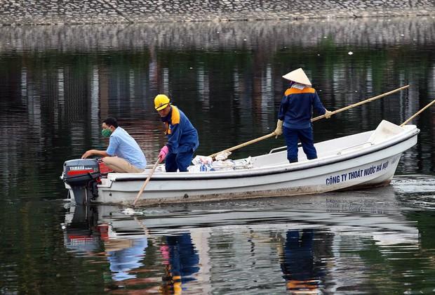 Hà Nội: Cá chết nổi trắng mặt hồ Hoàng Cầu - Ảnh 4.