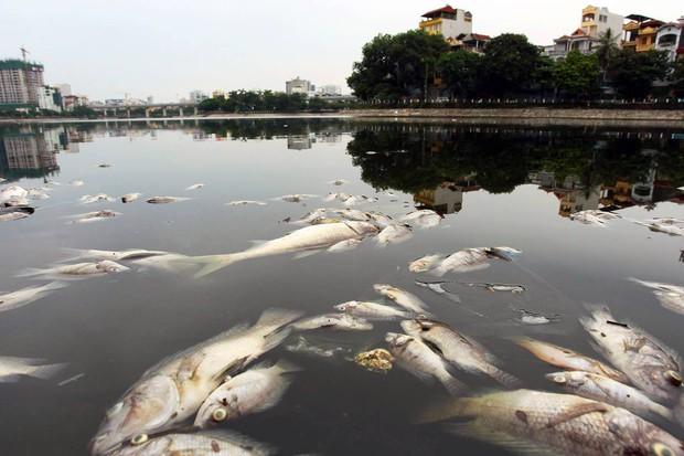 Hà Nội: Cá chết nổi trắng mặt hồ Hoàng Cầu - Ảnh 2.