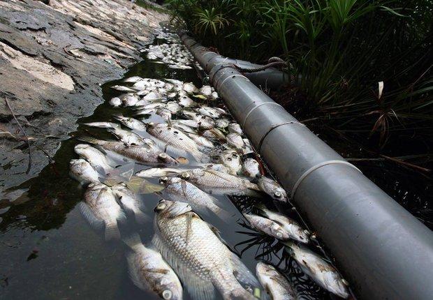 Hà Nội: Cá chết nổi trắng mặt hồ Hoàng Cầu - Ảnh 3.