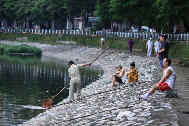Hà Nội: Cá chết nổi trắng mặt hồ Hoàng Cầu - Ảnh 10.