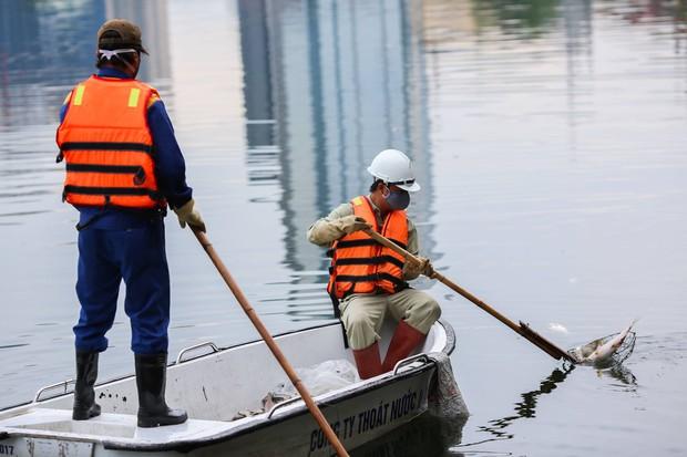 Hà Nội: Cá chết nổi trắng mặt hồ Hoàng Cầu - Ảnh 8.