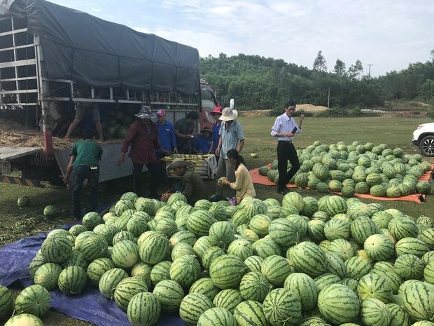 Nông dân Quảng Ngãi phải đem dưa hấu đổ cho bò ăn: Cần lắm sự chung tay giải cứu của cộng đồng - Ảnh 15.