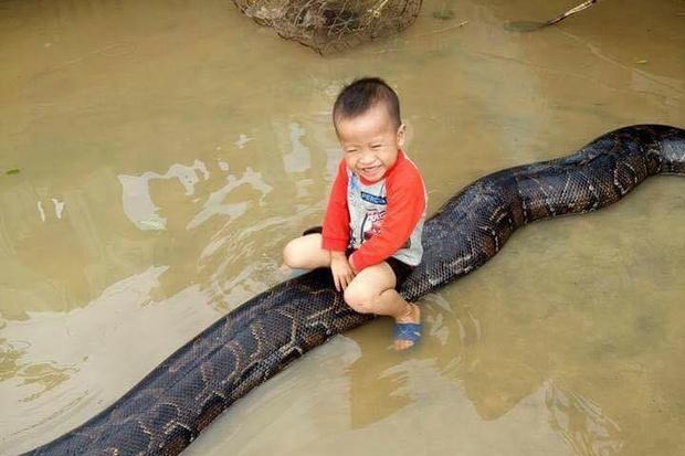 Clip sốc: Bé trai chơi đùa cùng trăn khổng lồ trong sân nhà ngập nước sau lũ - Ảnh 3.