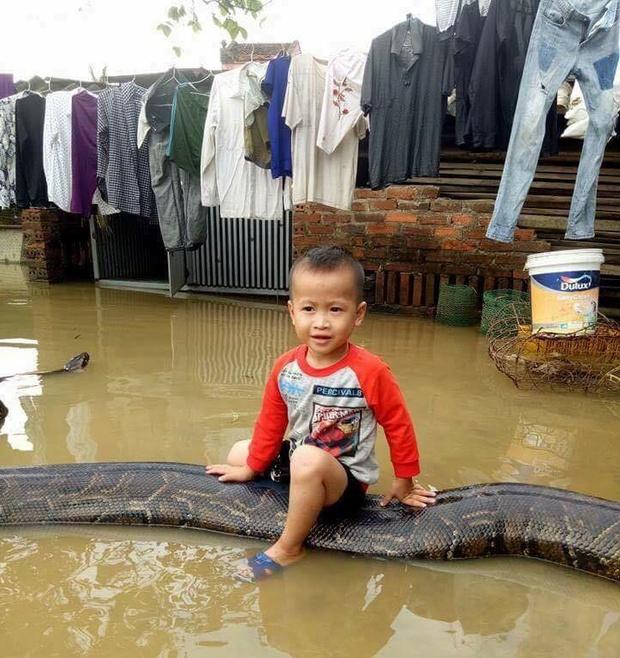 Clip sốc: Bé trai chơi đùa cùng trăn khổng lồ trong sân nhà ngập nước sau lũ - Ảnh 2.