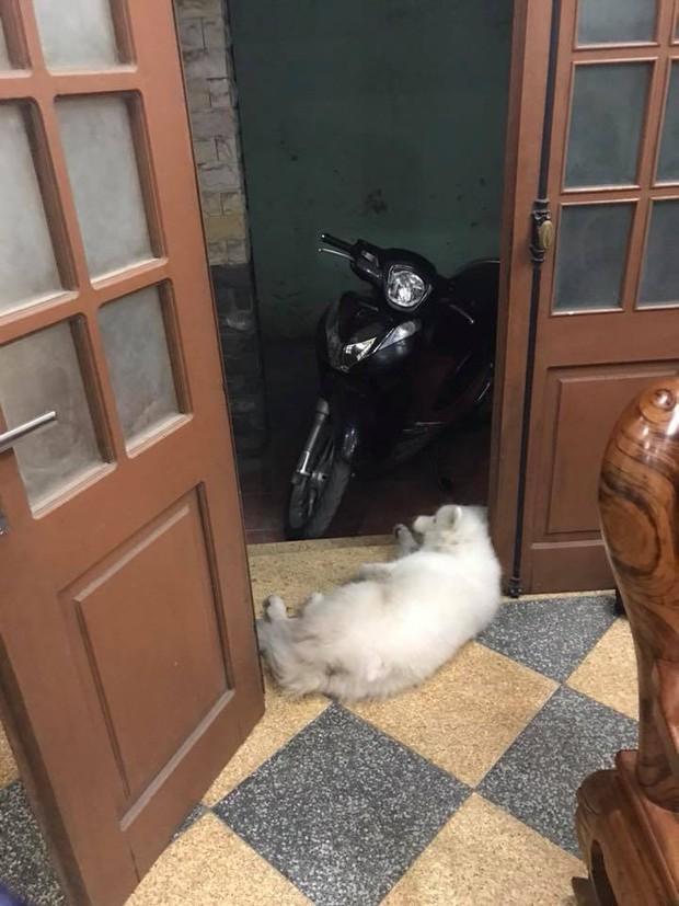 Clip: Chú chó Pit bull chỉ biết ăn với ngủ ngáy, không biết trông nhà và sợ tất cả chó hàng xóm - Ảnh 6.