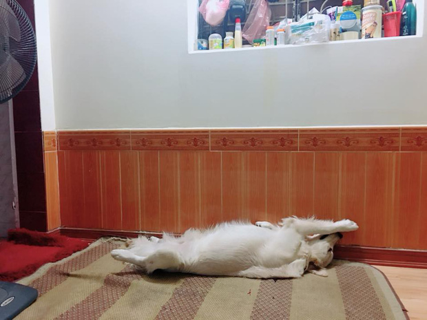 Clip: Chú chó Pit bull chỉ biết ăn với ngủ ngáy, không biết trông nhà và sợ tất cả chó hàng xóm - Ảnh 5.