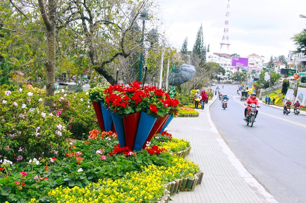 Đường hoa rực rỡ và đẹp mắt trước thềm Festival hoa Đà Lạt thu hút khách du lịch - Ảnh 1.