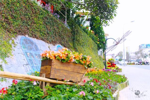 Đường hoa rực rỡ và đẹp mắt trước thềm Festival hoa Đà Lạt thu hút khách du lịch - Ảnh 8.