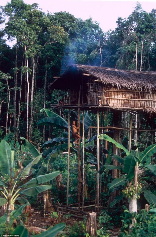 Sống trên những ngôi nhà cây cao tới 50m, bộ lạc bí ẩn khiến nhiều người khâm phục sức sống phi thường - Ảnh 6.