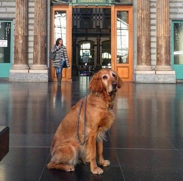 Hình ảnh những chú chó buồn bã chờ đợi chủ trên phố sẽ khiến bạn bật khóc - Ảnh 5.