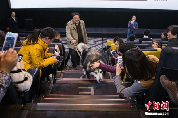 Suất chiếu phim đặc biệt dành cho chó và nguyên nhân khiến nhiều người xúc động nghẹn ngào - Ảnh 3.