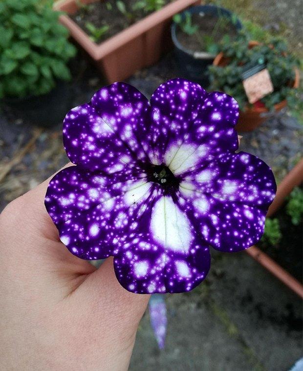 Loài hoa vi diệu như chứa cả dải thiên hà lung linh ở trong đó - Ảnh 5.