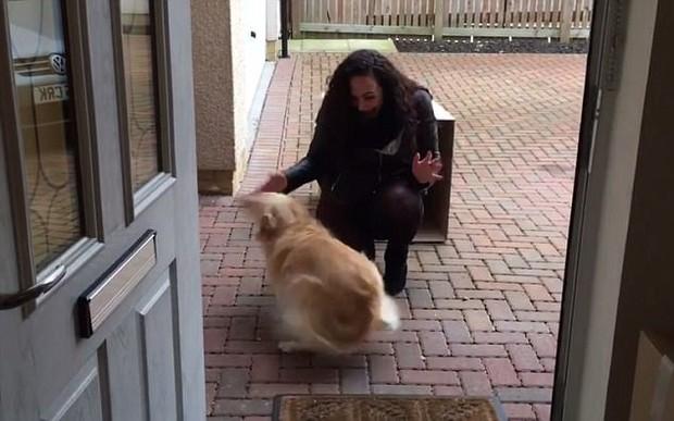 Nhận được một hộp quà từ phương xa, chú chó nhỏ đã vô cùng bất ngờ trước điều bí mật bên trong - Ảnh 3.
