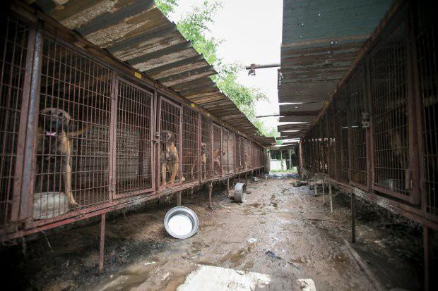 Hàn Quốc: Giải cứu thành công 149 chú chó sắp bị giết thịt mang ra chợ bán - Ảnh 3.