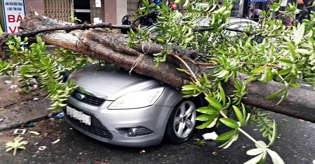 Đà Nẵng: Mưa lớn, cây xanh bật gốc đè móp đầu ôtô đậu bên đường - Ảnh 3.