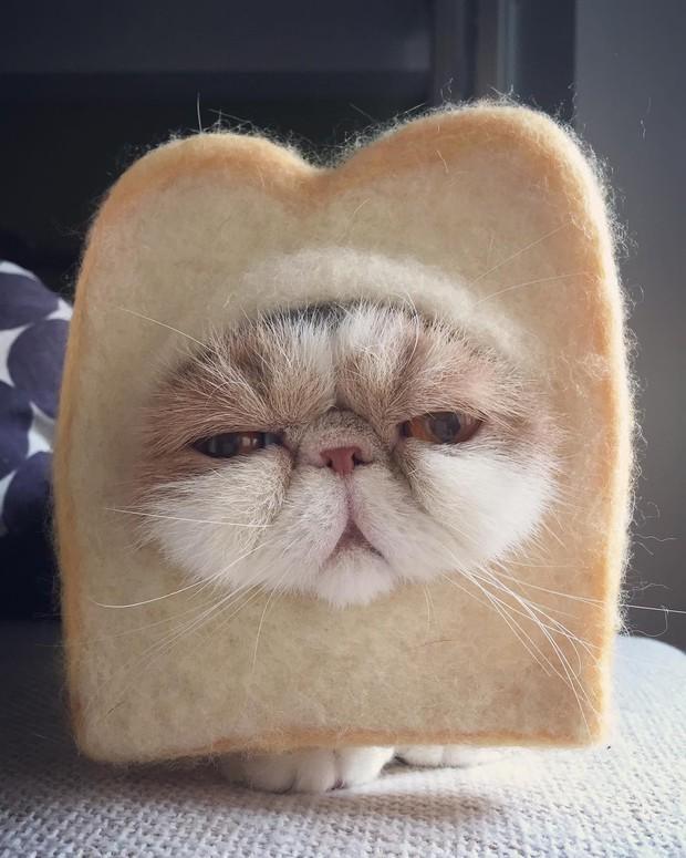 Chú mèo có bộ mặt nghiêm trọng nhất quả đất - Ảnh 5.