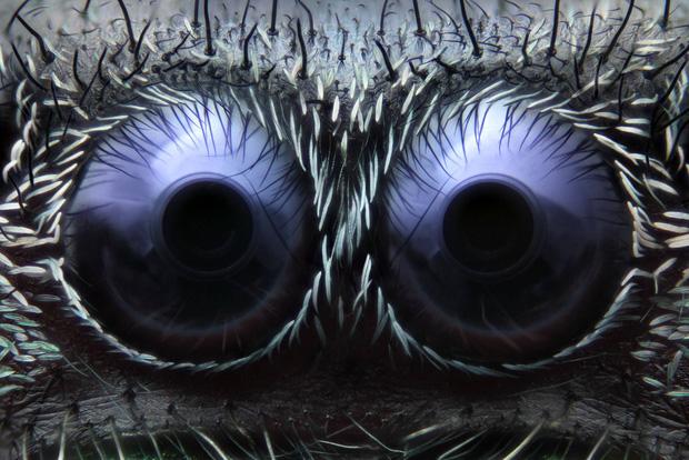 Đây là bộ mặt thật của sinh vật đang sống quanh ta khiến ai xem cũng muốn xỉu - Ảnh 9.