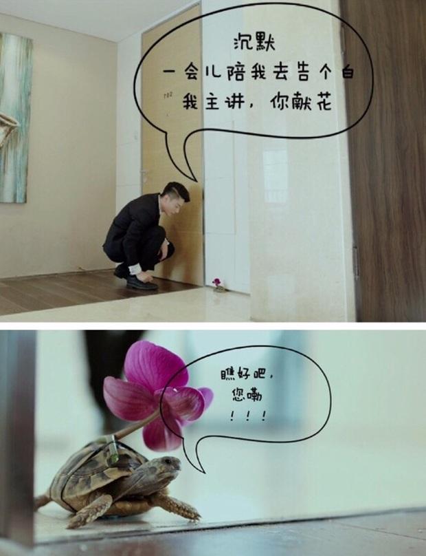 7 thú cưng đáng yêu lạc lối mà ai cũng đổ trên màn ảnh Hoa Ngữ - Ảnh 33.