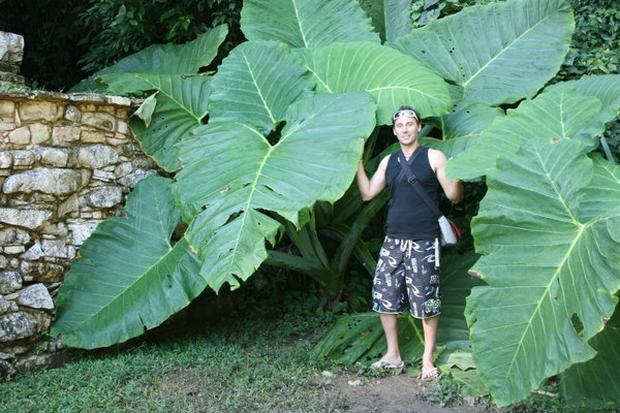 Khoa học tìm ra vì sao kích cỡ lá cây khác nhau - lá thì to vĩ đại, lá thì bé tin hin - Ảnh 2.