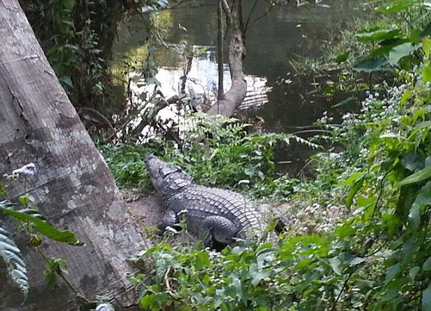 Cố tình tiếp cận và chụp ảnh selfie với cá sấu khổng lồ ở Thái Lan, du khách người Pháp nhận kết cục đau đớn - Ảnh 1.