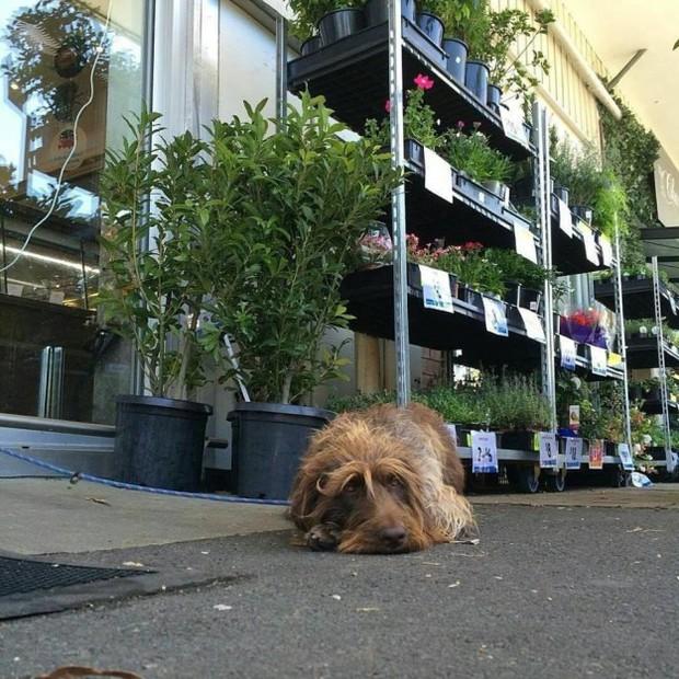 Hình ảnh những chú chó buồn bã chờ đợi chủ trên phố sẽ khiến bạn bật khóc - Ảnh 7.
